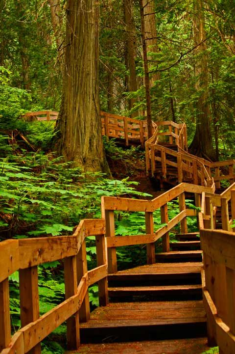 Hiking, Boardwalk, Trail, Giant Cedars, Revelstoke BC Canada, 062410Revel39V-9514