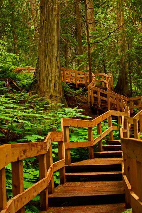 Hiking, Boardwalk, Trail, Giant Cedars, Revelstoke BC Canada, 062410Revel39V-9514