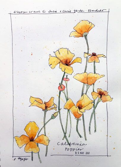 from my sketchbook ~ California Poppies