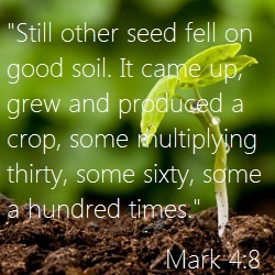 17 best images about the miracle of seeds on pinterest for Soil 8 letters