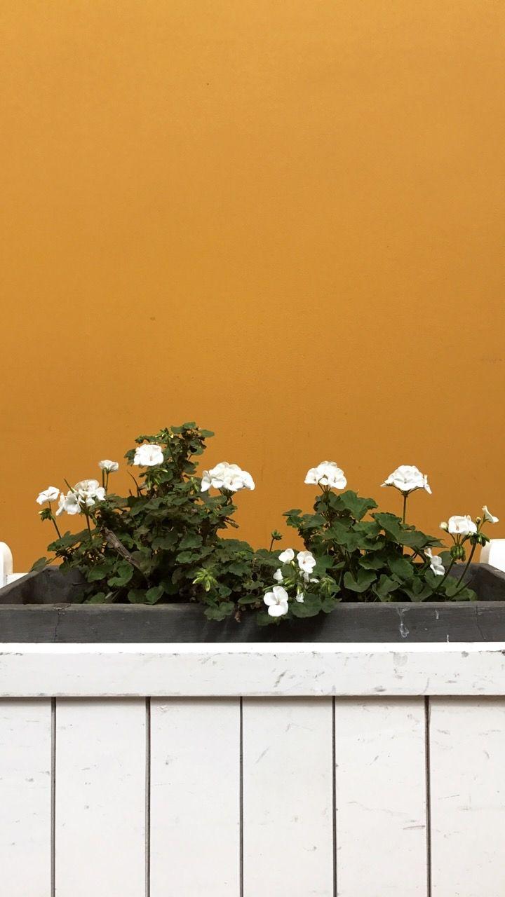 Aesthetics White Flowers Walls Plant Wallpaper