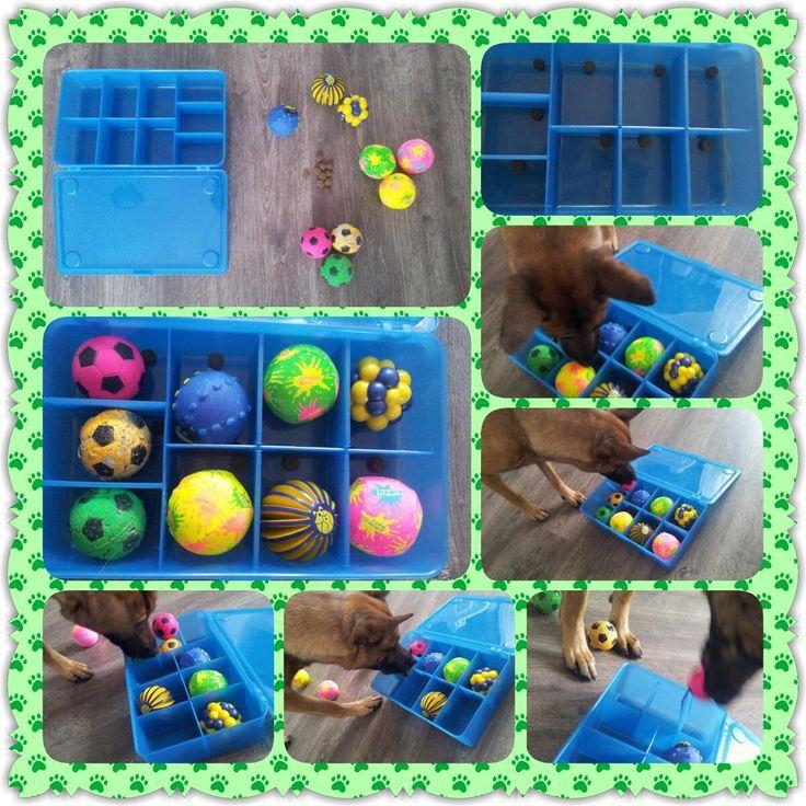 DIY dog brain games; dog enrichment activities ; dog food toys …