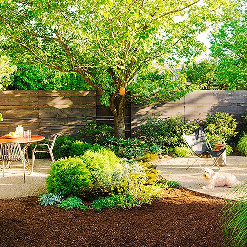 How to create a dog-friendly garden both you and your pups will love