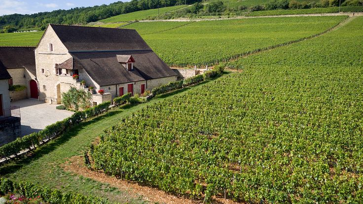 """Join 13 people right now at """"Château Latour Owner François Pinault Buys Burgundy Monopole Clos de Tart 