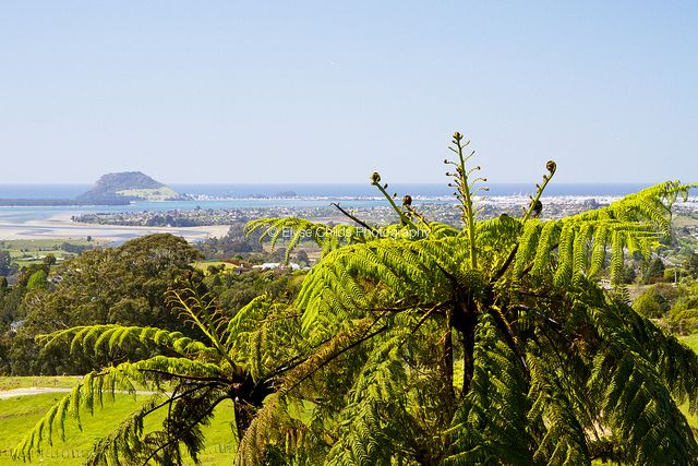 Looking over Tauranga | © Elyse Childs Photography