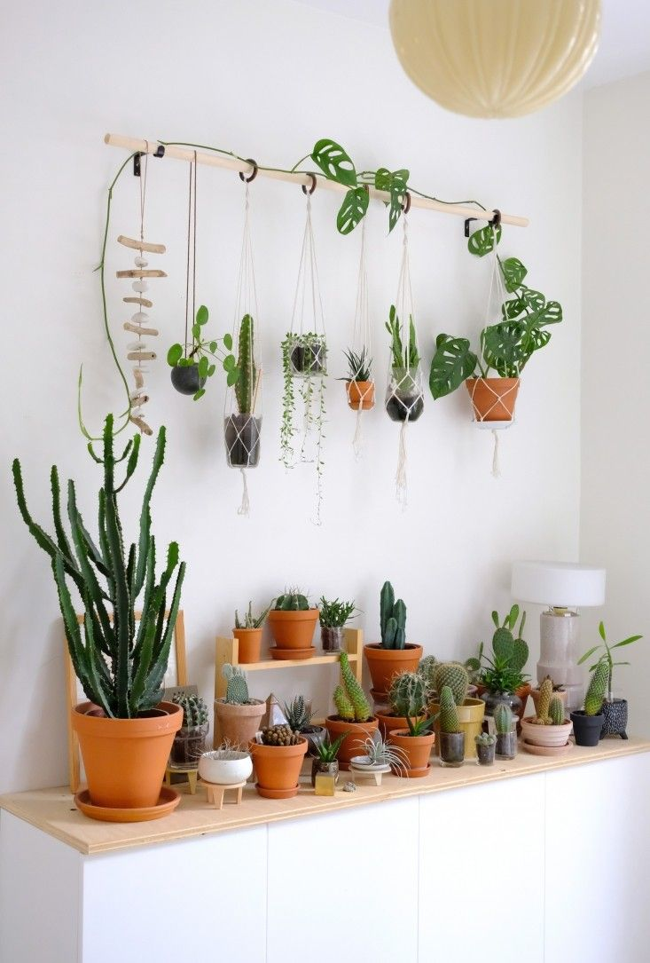 Diy hanging plant wall with macrame planters plants plant wall plants bedroom for Interior wall decoration ideas