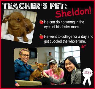TAGS Awards: Part 1 - Teacher's Pet: Sheldon!