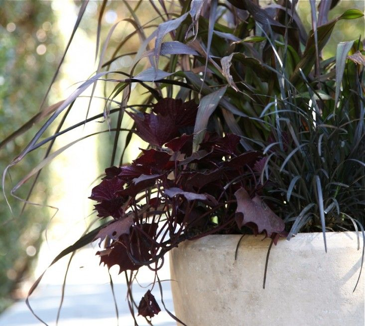 Here's a hardy mix of dark and moody perennials and grasses that needs little water and makes a dramatic statement at an entryway.