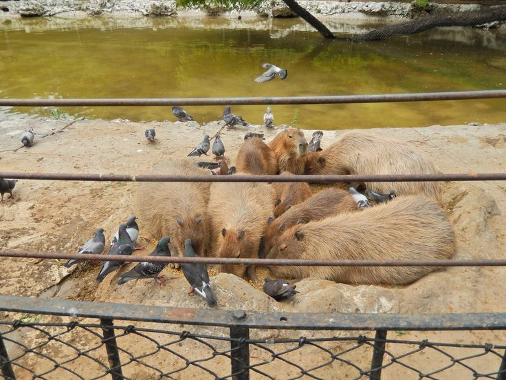 https://flic.kr/s/aHsjMj1Fdc   Zoológico de Buenos Aires, Argentina   Zoológico de Buenos Aires, Argentina