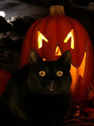 Happy Halloween! Please Remember to Keep Your Black Cats Safely Indoors Tonight !!... By Artist Unknown...: