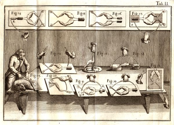 Illustration of Italian physician Luigi Galvani's experiments, in which he applied electricity to frogs legs; from his book De Viribus Electricitatis in Motu Musculari (1792).