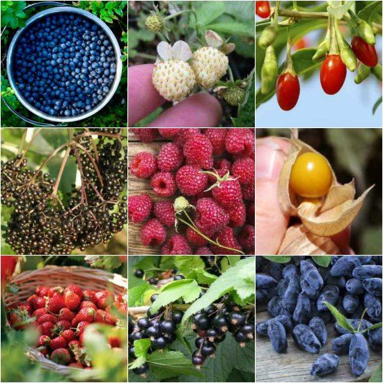 Are you interested in having plants that produce berries? You may want to look at the types of berry bushes to grow in your yard before deciding what to do.