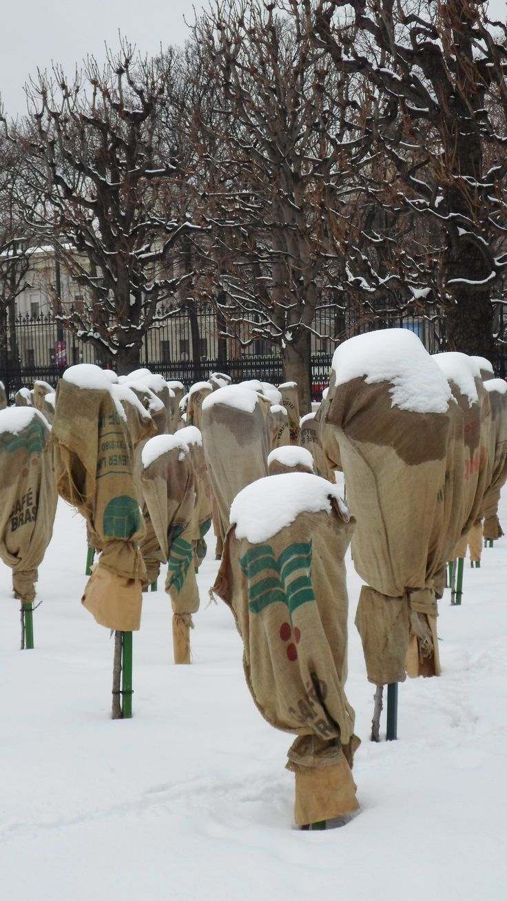 Rosenstöcke im Volksgarten Wien - Februar 2013