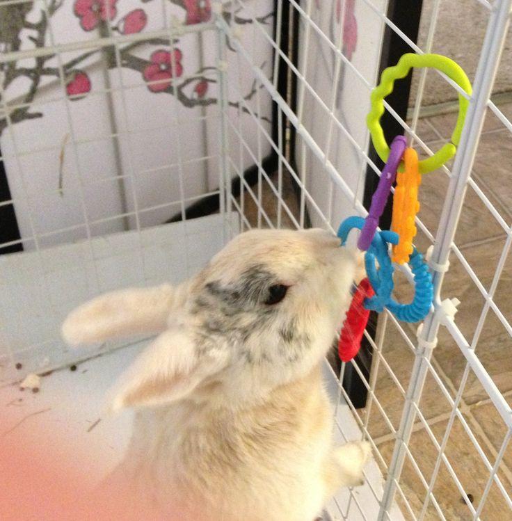 298 best bunnies images on pinterest house rabbit pet