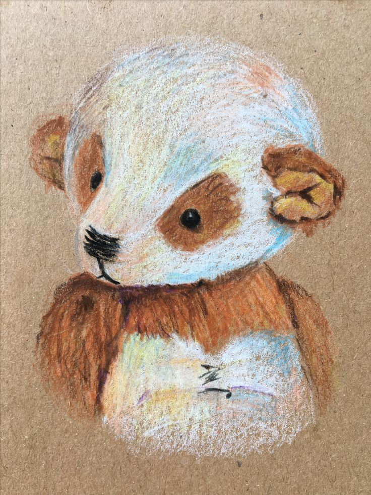 Teddy panda illustration cute bear colored pencils pencil