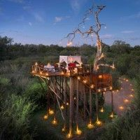 Chalkley Treehouse - A secure and lavish platform under the stars, the treehouse has all the 5-star comforts, but affords an experience as wild as the animals that roam beneath it. | Africa