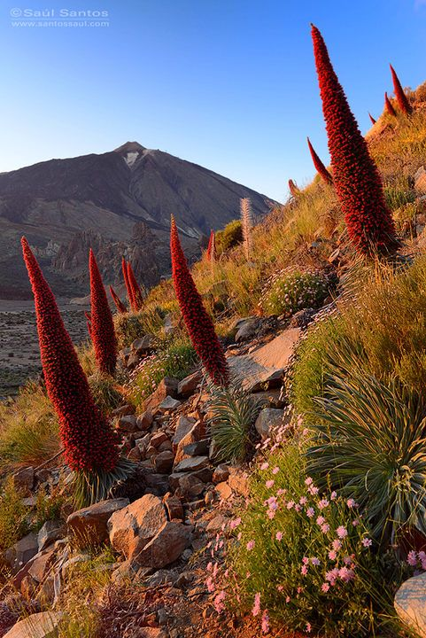 Teide, Tenerife. Islas Canarias