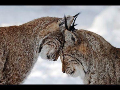 Czy Zwierzęta też mają uczucia?