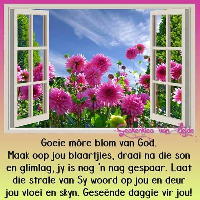 Goeie more blom van God.