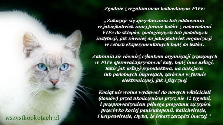 Sprzedaż kotów zgodnie z regulaminem FIFe