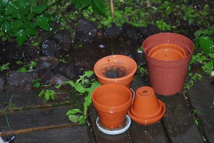 garden in rain