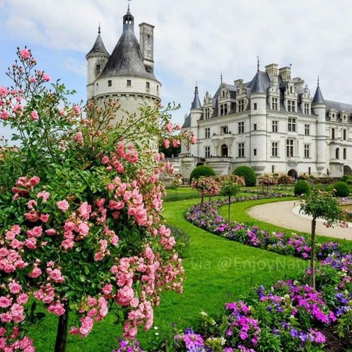 Roses Garden At Chateau De Chenonceau In Loire Valley France