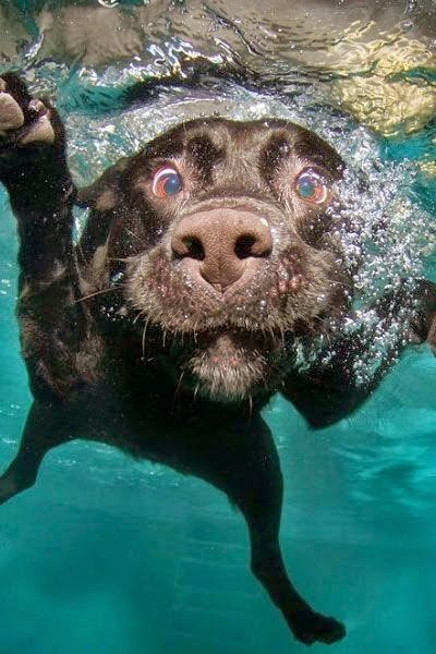 Top 10 Naughtiest Dog Breeds.....Why does this chocolate lab not surprise me....Brownie :)