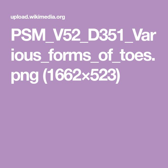 PSM_V52_D351_Various_forms_of_toes.png (1662×523)