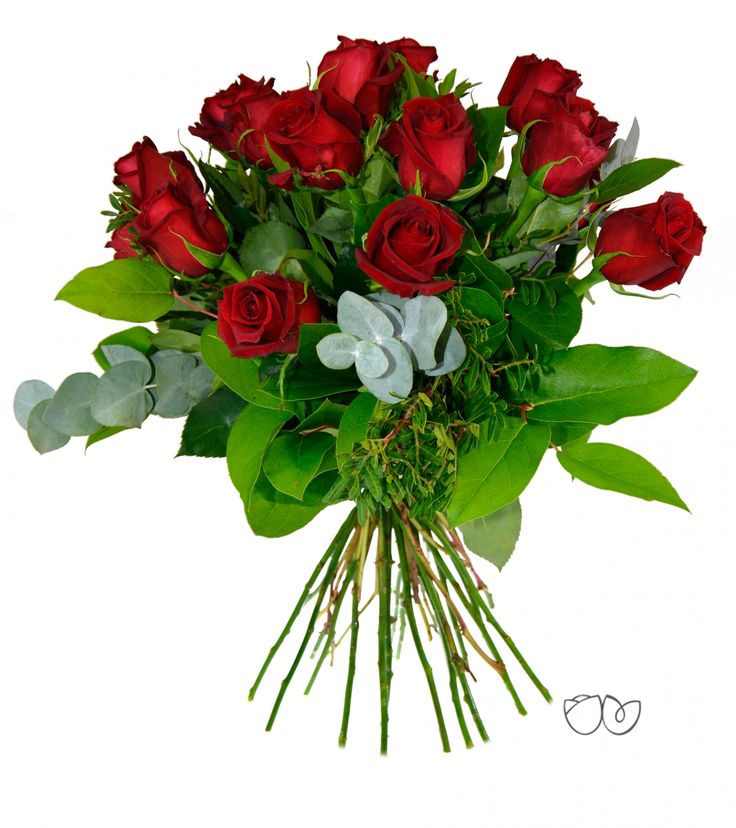 morira por vos rosas rojas para tu pasin y tu amor elaborado con