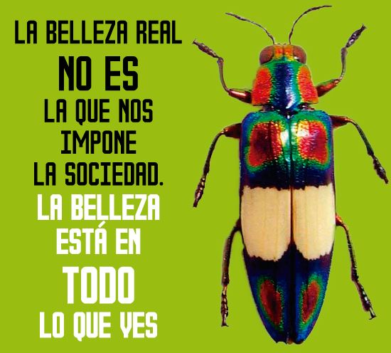 #Insects #insectos #quotes #frases #pensamiento #colombia #illustration #ilustracion #wayúu #creatividad