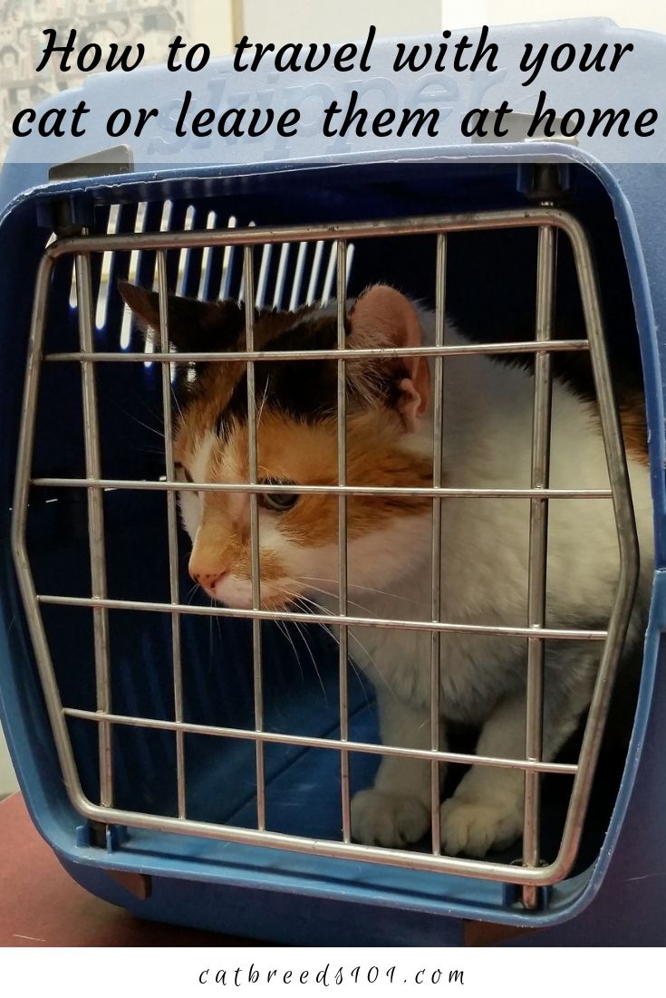 How To Travel With Your Cat Or Leave Them At Home Cat Travel
