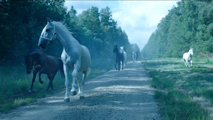 749 plans vidéo HD de haute qualité sur troupeau de chevaux de la banque d' images de Framepool sont prêts pour l'octroi de licences et téléchargement instantané personnalisé.