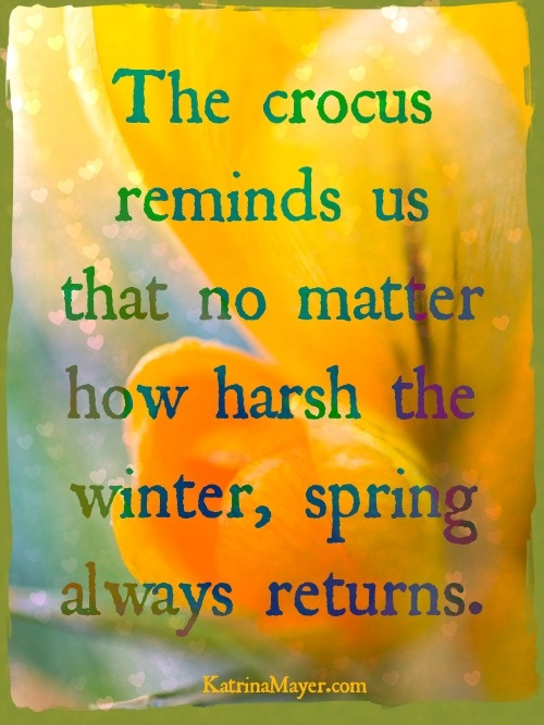 The crocus reminds us that no matter how harsh the winter, spring always returns.