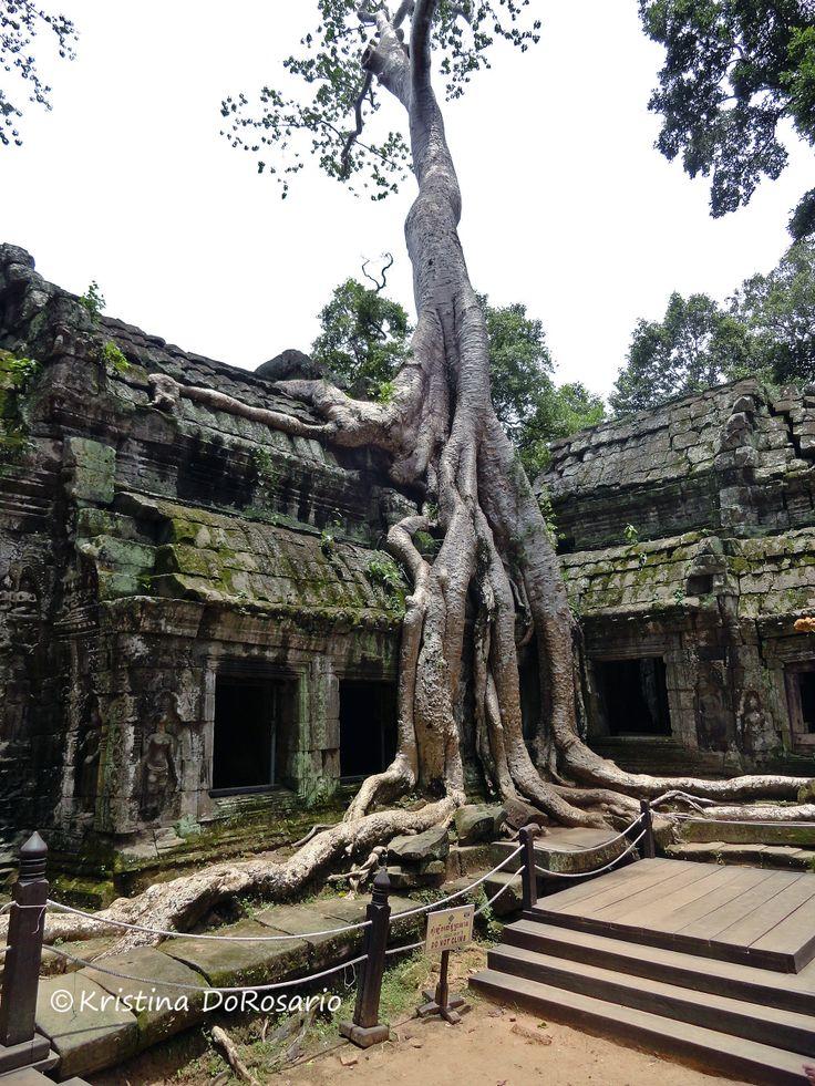 Angkor Beauty