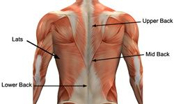Link to lots of back exercises