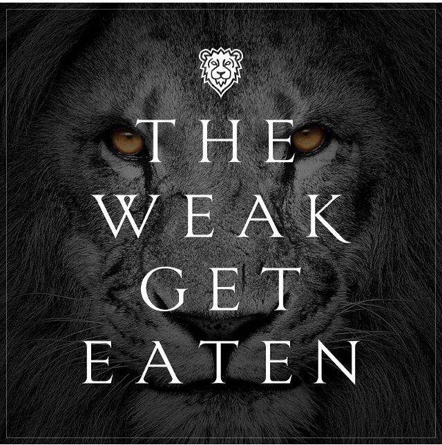 The Weak Get Eaten   Team popo   Pinterest   The o'jays