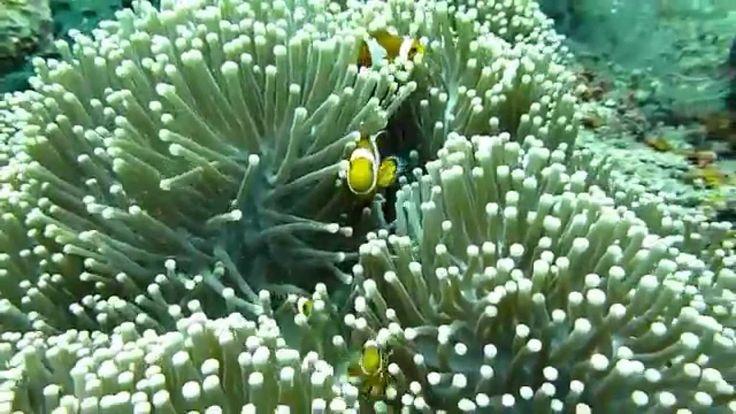 バリ島ダイビング:バリ島アメッドでダイビング/Bali diving - Amed