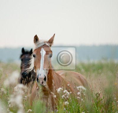 Fotobehang foal, equestrian, outdoors - paarden in het veld ✓ Makkelijke montage ✓ 100% ecologisch afgedrukt ✓ Bekijk de opinies van onze klanten!