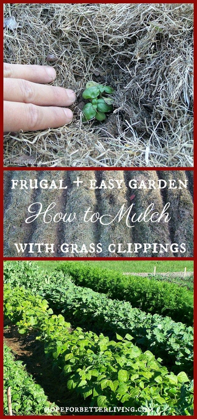 how to kill grass growing in mulch