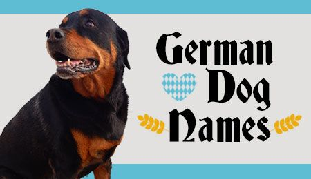 German dog names, great for Rottweilers, German Shepherd Dogs, Weimeraners, Dachshunds and other German breeds.