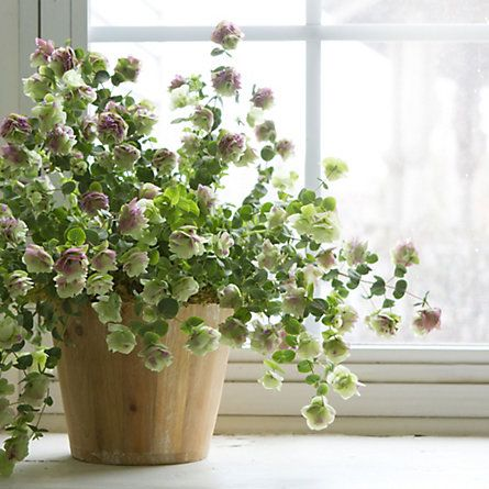 flowering oregano - was unaware of its existence until recently, now I'm obsessed.