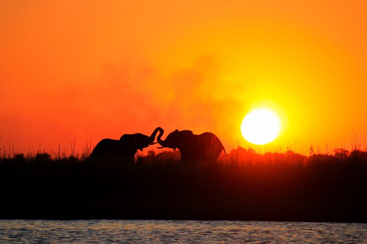 Our next big adventure: Botswana and South Africa