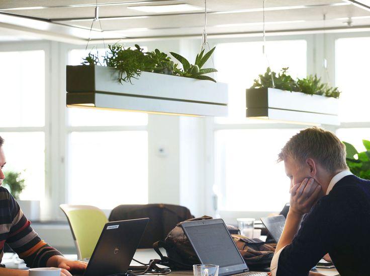 Greenworks' Bridge pendant lamp, office space, Stockholm.