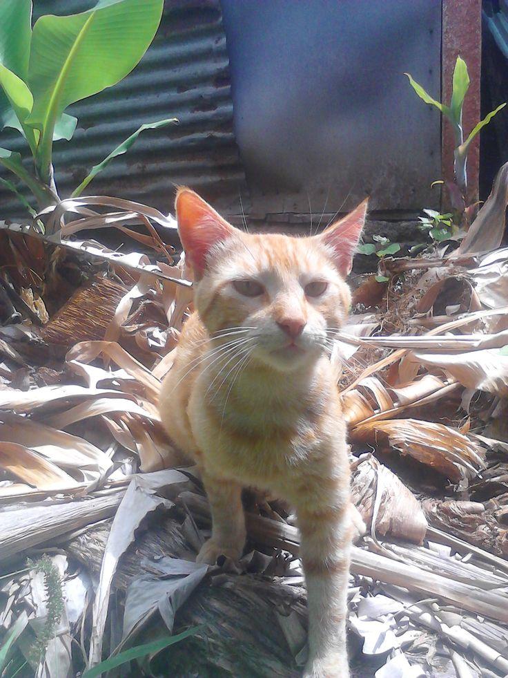 gato «amarelo» www.decisoesvibrantes.com ... antes de comprar ou vender casa, ligue 963701529 Teresa Caires, obrigada pela preferência!!!