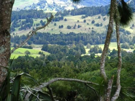 The Valley, Okaihau New Zealande