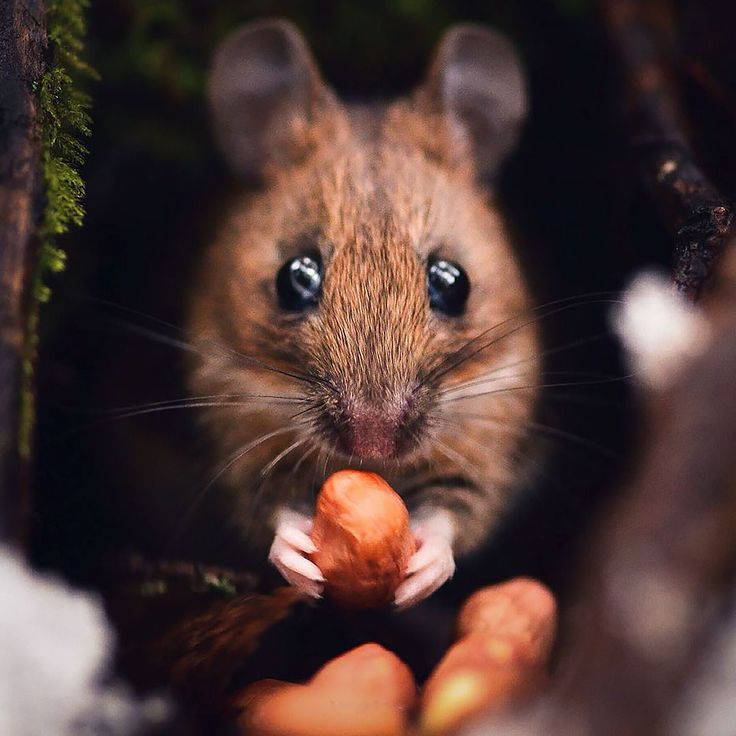 21-year-old Finish photographer Konsta Punkka takes breathtaking pictures of nature and lifestyle. We've written about him previously, but just can't seem to get enough of his photos of wild animals. Punkka manages to capture the animals from so close, it's unbelievable. His secret? He brings snacks to the photoshoots and feeds them to the animals.