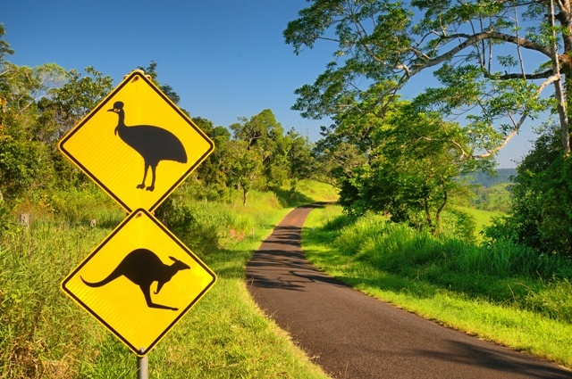 Country road in the Atherton Tablelands, Australia.