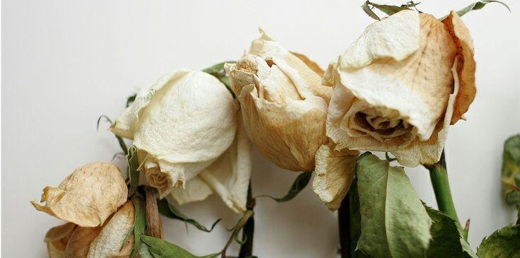 dead white roses