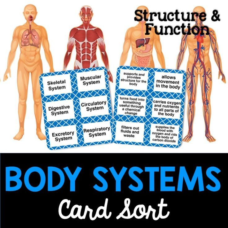 the structures of body systems are Human body systems activity 344 water balance page 2 human body systems o describe the role of at least two other organs or structures that help the body.