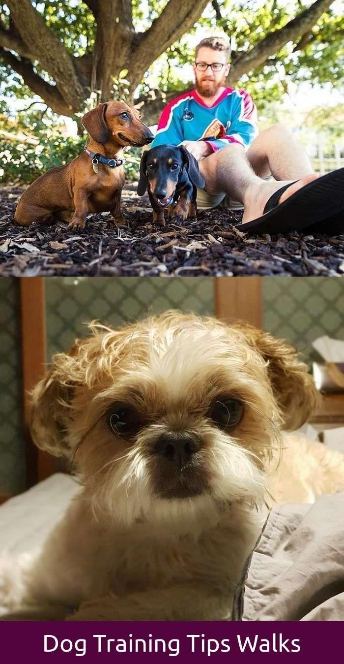 Funny Dog Names Puns - Goldenacresdogs com